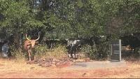 Африканская коллекция Сезон-1 Священный огонь химба. Часть 1: «Люди, лишенные дурных мыслей»