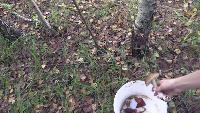 Alexander Kondrashov Все видео Шесть ведер грибов за два часа.