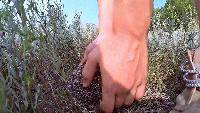 KREOSAN Все видео КАК РАЗВЕРНУТЬ ЕЖА Нереальный позитив от обаятельно фыркающего ёжика!