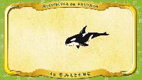 Мультипедия животных Французский алфавит Французский алфавит - La lettre B - la Baleine