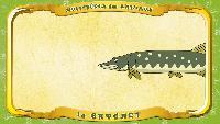 Мультипедия животных Французский алфавит Французский алфавит - La lettre B - le Brochet