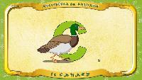 Мультипедия животных Французский алфавит Французский алфавит - La lettre C - le Canard
