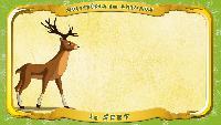 Мультипедия животных Французский алфавит Французский алфавит - La lettre C - le Cerf