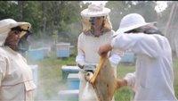 Мужская работа 1 сезон 8 выпуск. Пчеловод