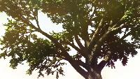Ridddle Новые выпуски Новые выпуски - ЧТО БУДЕТ, ЕСЛИ СОЛНЦЕ ПРЕВРАТИТСЯ В ЛАЗЕР?