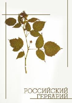 Смотреть Российский гербарий онлайн
