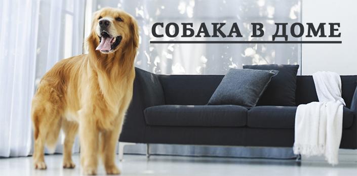 Смотреть Собака в доме онлайн