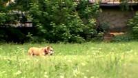 Собака в доме 1 сезон 15 выпуск
