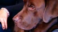 Собака в доме 1 сезон 2 выпуск